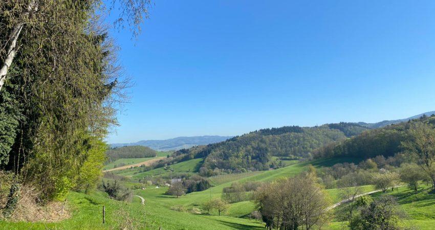 Ausblick auf den Schwarzwald beim Joggen